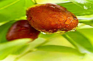 Dates health benefits in hindi