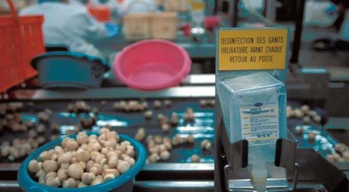 Liste des guides de bonnes pratiques d'hygiène en agroalimentaire classés par secteur