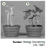 Faktor-Faktor Internal dan Eksternal Yang Mempengaruhi Pertumbuhan dan Perkembangan Pada Tumbuhan atau Tanaman