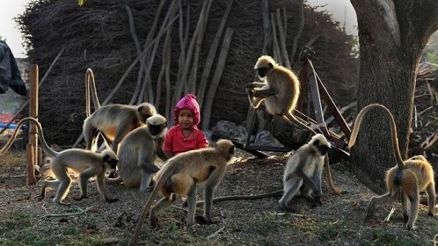 The Jungle Book Zaman Modern Bocah Terlihat Akrab Bermain-main dengan Monyet, Dikira Akan Diserang, Ternyata