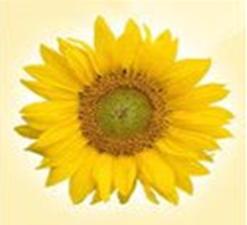 تحميل برنامج StudioLine Photo Basic 4.2.43 لتحرير و عرض الصور الرقمية
