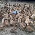 Jenis Bebek di Indonesia