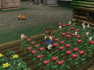 Link download harvest moon a wonderful life usa + dolphin emulator.