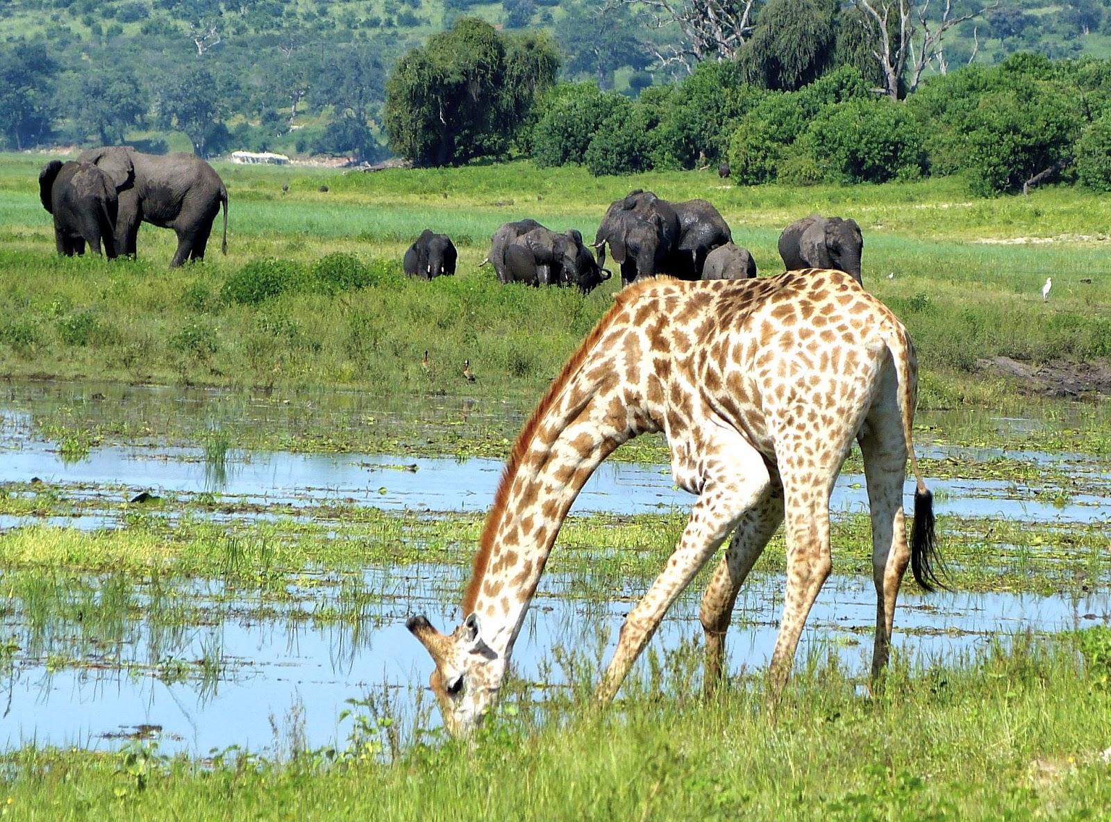 travel bits & bites: african safari- luxury itinerary on an