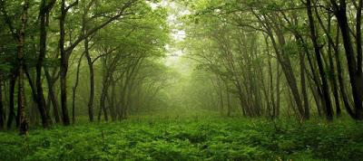 Soal Biologi :  65 Pilgan BabTumbuhan / Plantae dan Jawaban