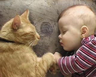 Sedikit Tidur Bisa Memperpanjang Usia