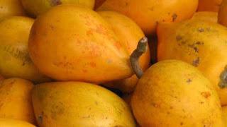 gambar buah sawo mentega, alkesah