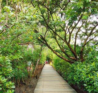 Harga-tiket-masuk-hutan-mangrove-wonorejo-surabaya-terbaru-2019