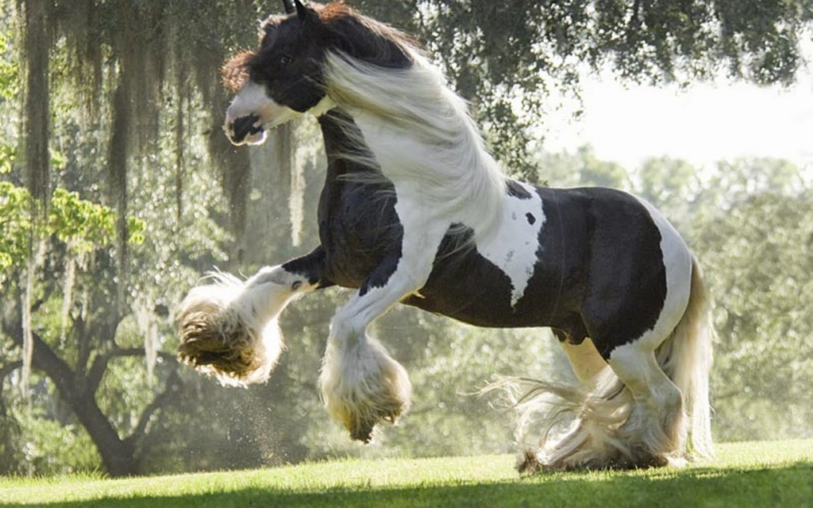 Animals Wallpapers Domesticated Stallions