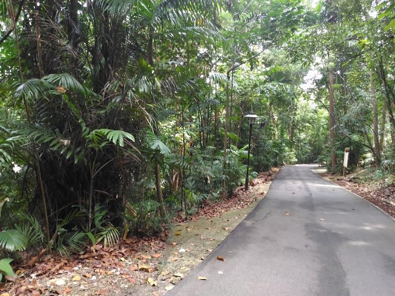 拉柏多自然保護區走道一景