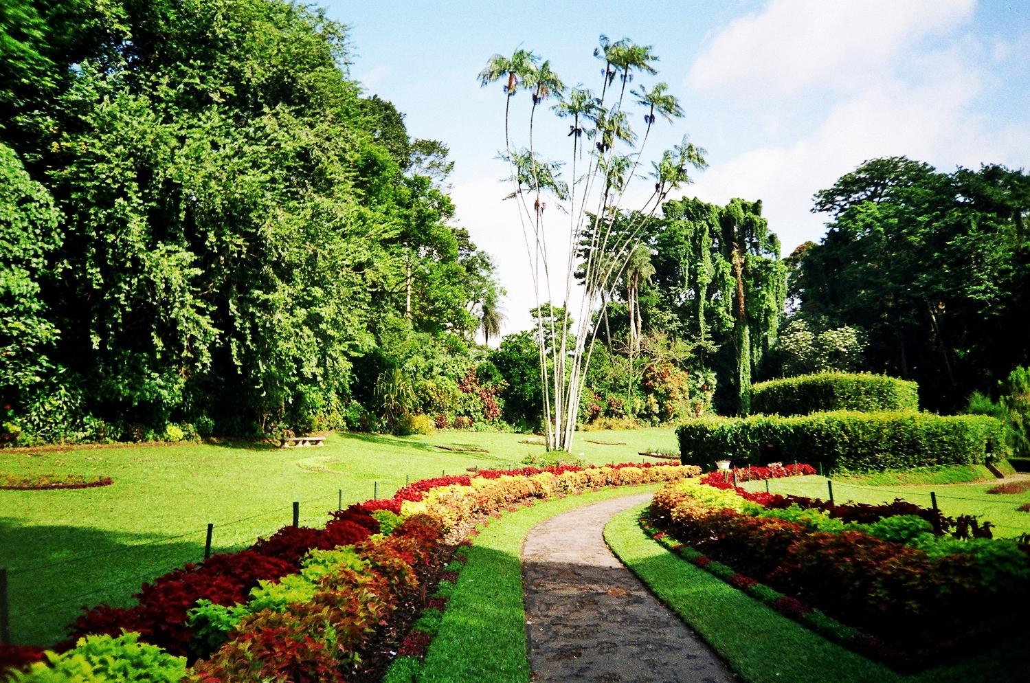 Un lugar al d a 563 jard n bot nico de peradeniya for Sanse 2016 jardin botanico