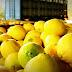 Los limones argentinos ya pueden ingresar a Estados Unidos