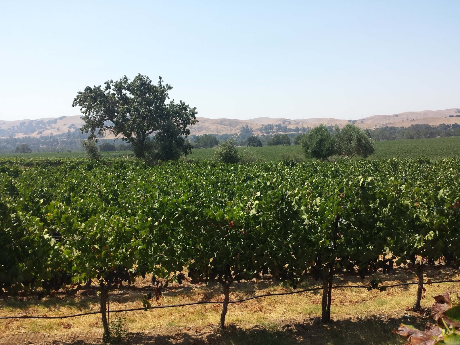 Winecompass Seven Reasons To Visit The Livermore Valley Ava