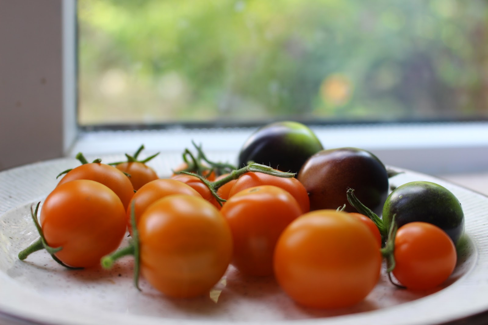 Photo of sungold and indigo rose tomatoes ripening on my windowsill