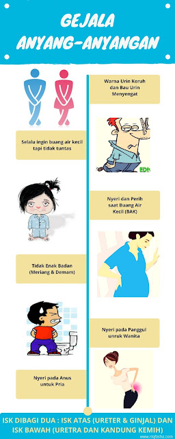 infografis gejala saat mengalami anyang-anyangan