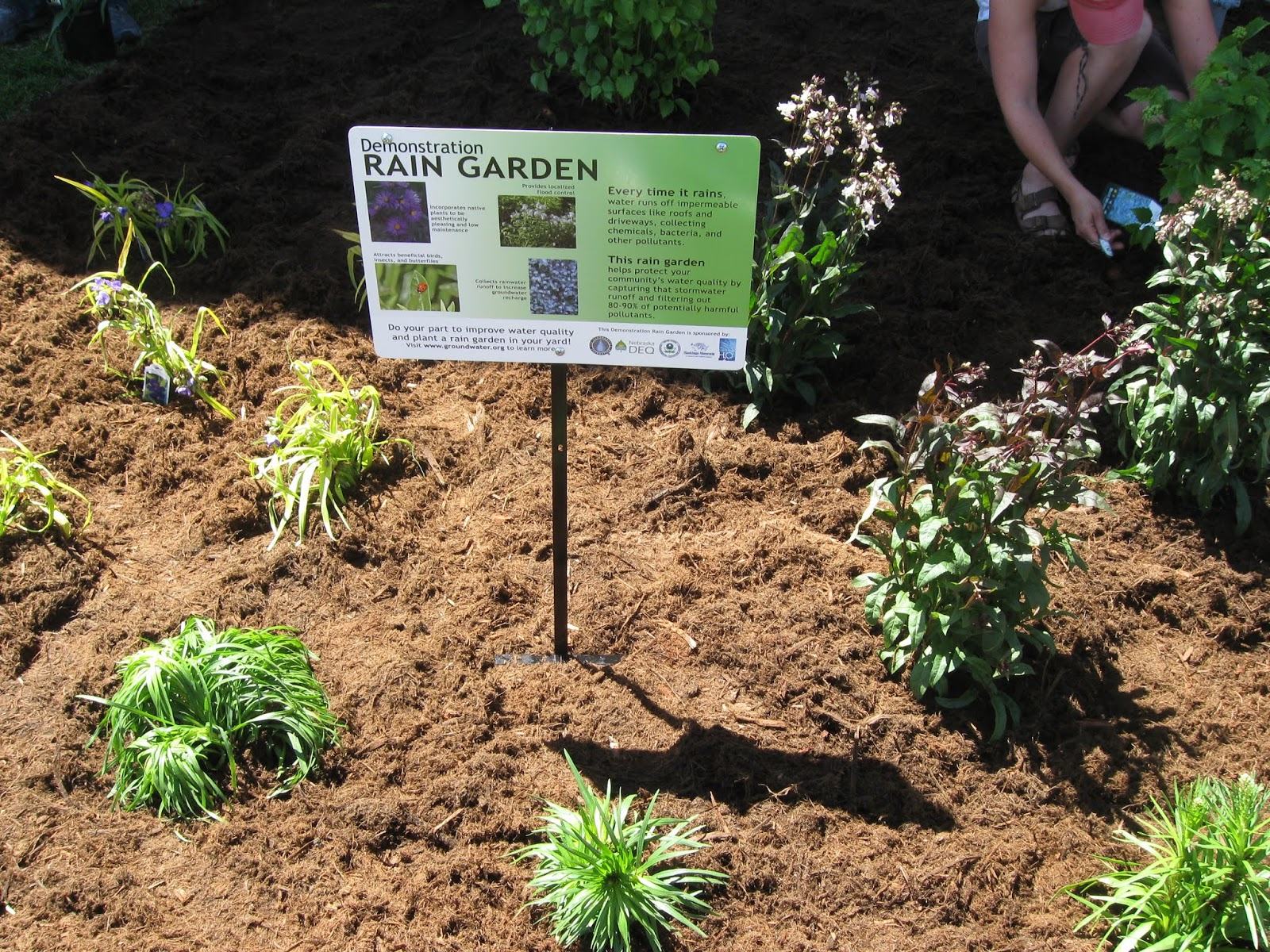 Groundwater Blog: BLOG: What Makes a Good Spot for a Rain Garden?