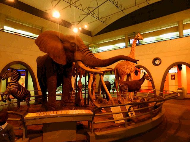 Sala de los mamíferos en el Museo Nacional de Nairobi