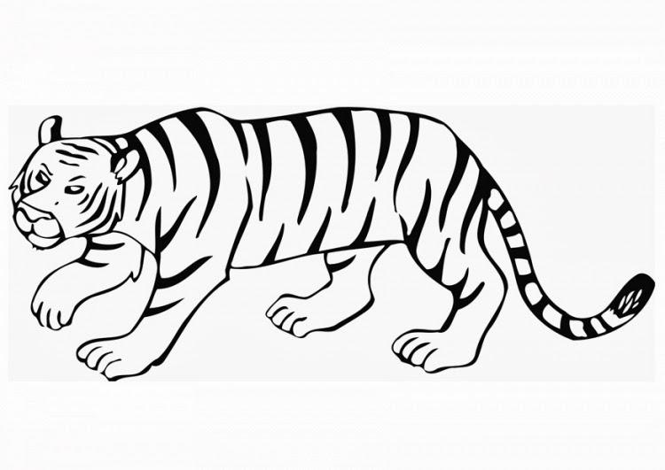 malvorlagen tiger