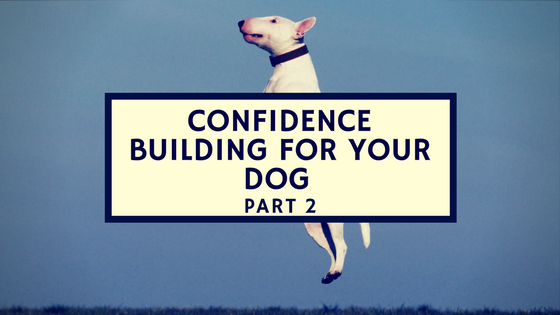 confidence building exercises for your dog
