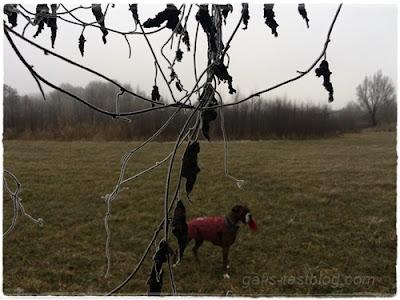 Vertrocknete gefrorene Blätter und Boxer Amy