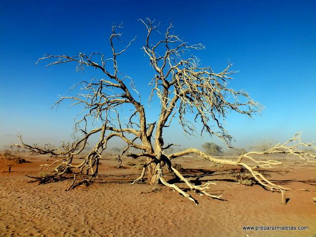 árbol muerto desierto namibia