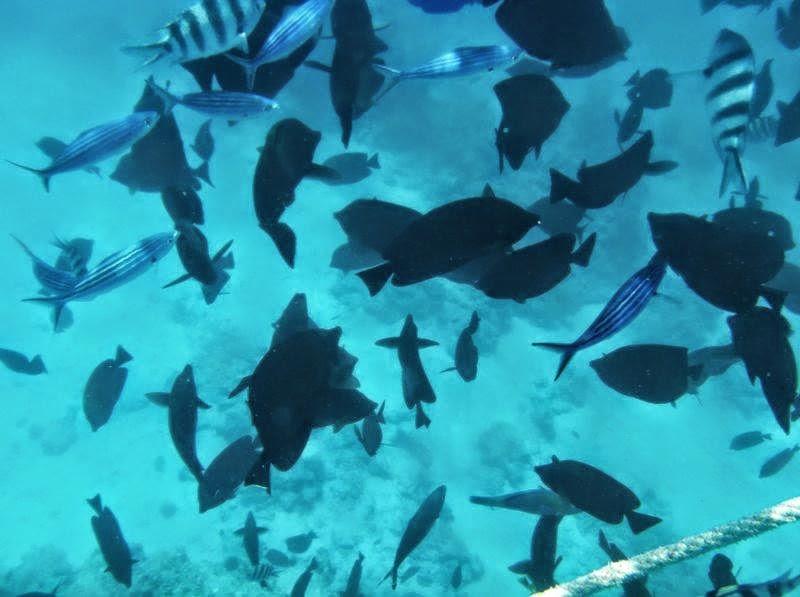 Piękna rafa koralowa w Egipcie.