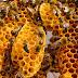 Căpăceala - Elixirul secret produs de albine care trateaza numerose afectiuni