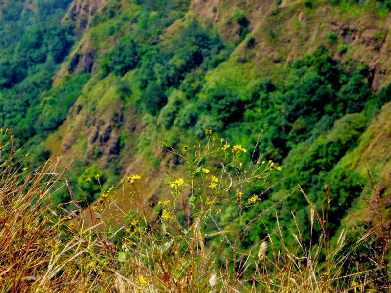 Simple yet elegant mountain flowers Ambolim - Hill station near Goa - Pick, Pack, Go