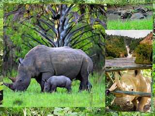 2 days Murchison falls national park plus rhinos ,2 Days Murchison falls National Park ,murchison falls national park accommodation murchison falls national park entrance fee murchison falls, national park safari murchison falls national park contacts activities in, murchison falls national park