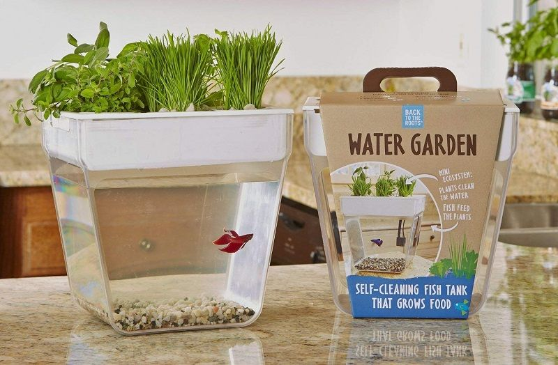 Betta Fish Tank Size - Back To The Roots Water Garden Fish Tank, Indoor Aquaponic Kit