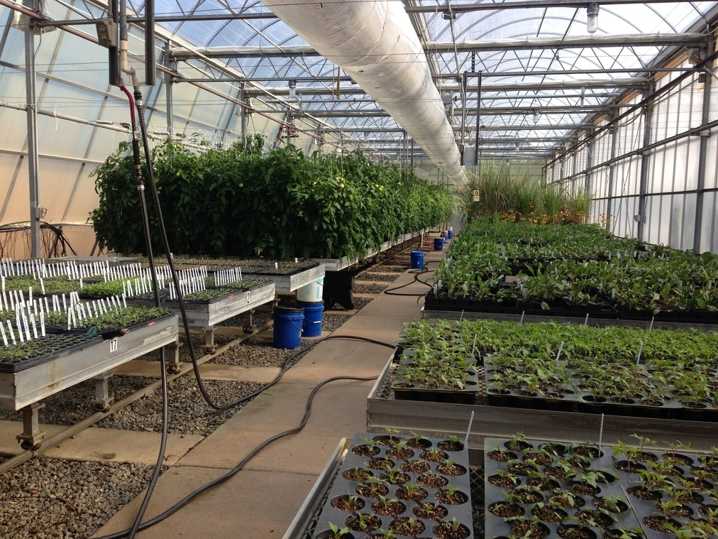 One of the greenhouses at the MCI Lab