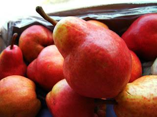 taille bio des arbres fruitiers abricotier cerisier prunier vigne pêcher pommier poirier framboisier