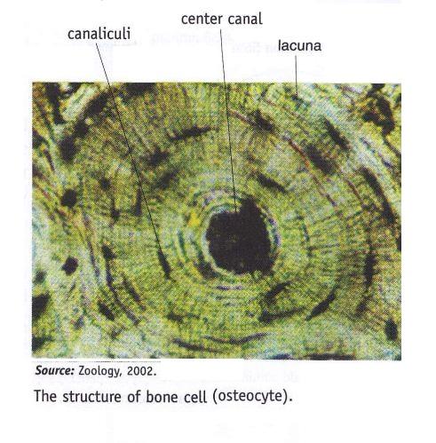 oktober 2012 ~ new science biology