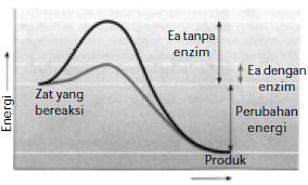 Soal Metabolisme dan Jawabannya