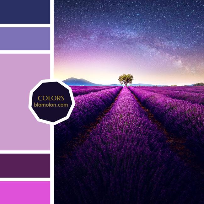 variedad_en_color_moodboard_68