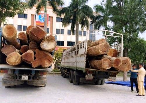 Bắt giữ 2 xe tải chở hàng chục tấn gỗ Táu không rõ nguồn gốc