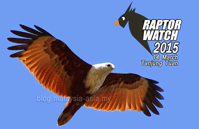 Raptor Watch Tanjung Tuan