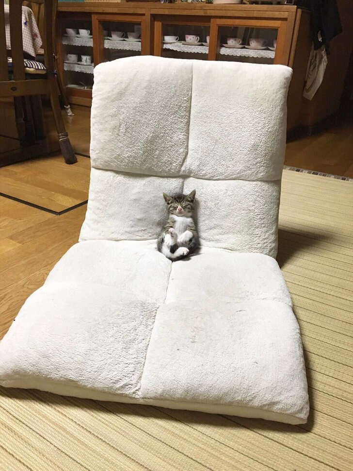 25 Heart-Melting Pictures That Made Even The Toughest Of Us Cry - One very comfy throne for a kitten