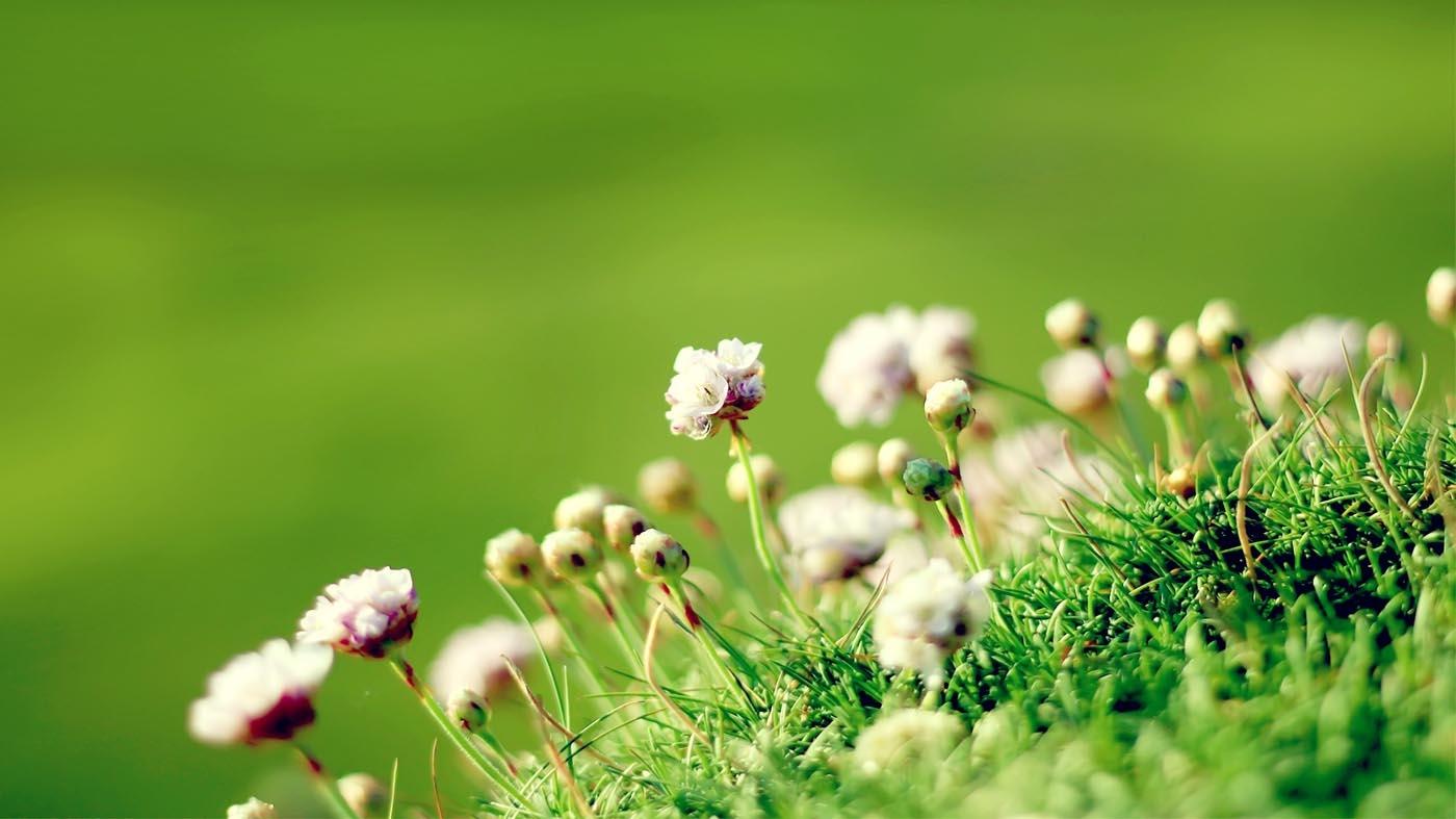 Mùa xuân là mùa khai hoa, mùa của muôn hoa khoe sắc rực rỡ, kể cả cỏ cây vạn vật của đất trời cũng đổi thay, đâm chồi với sức sống mãnh ...