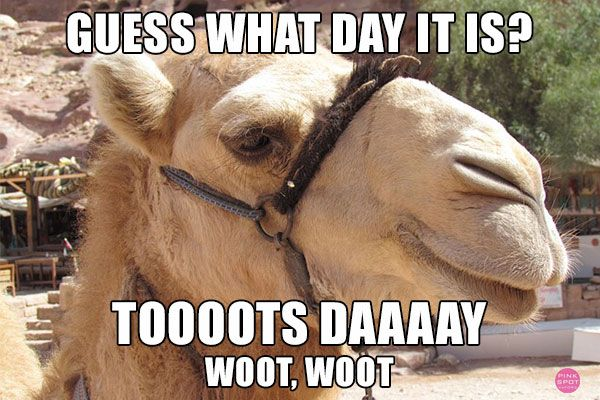 Happy Hump Day Camel Pictures