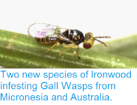 http://sciencythoughts.blogspot.co.uk/2014/11/two-new-species-of-ironwood-infesting.html
