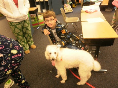 White poodle, Carma Poodale, teaches children about dogs