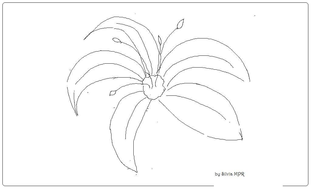 Dibujos De Flores Para Colorear Pintar E Imprimir Flores 6: Todo Msn Chat: Flores Para Colorear E Imprimir Gratis