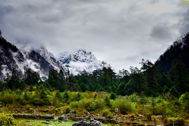 Shades of green in Yumthang Valley at Sikkim @DoiBedouin