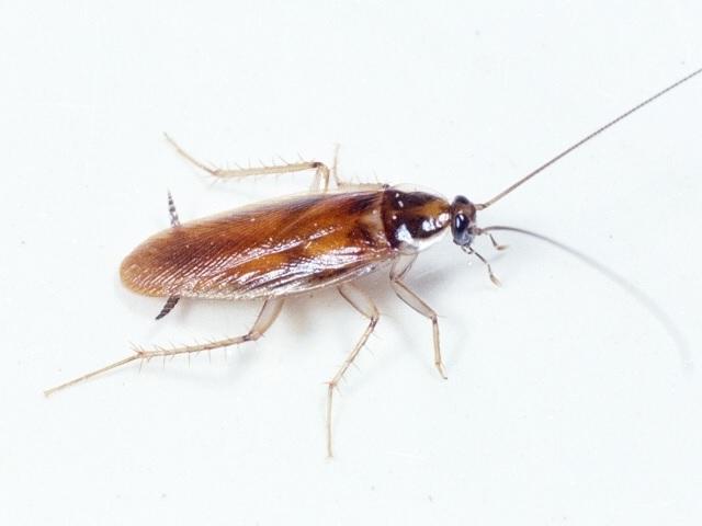 Roaches on Tire Sensor Light Stays On