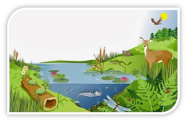 مفهوم النظام البيئيComponents of Ecosystem
