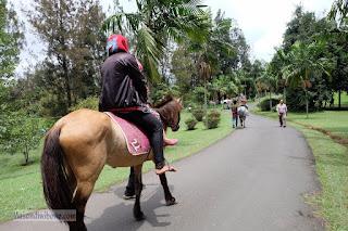 Naik kuda di trek aspal