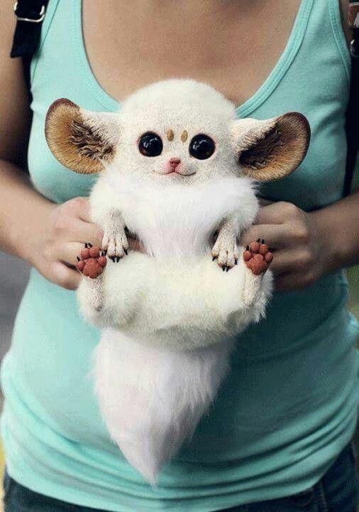 Inari Fox | A-Z List of 125 Rare Albino Animals [Pics]