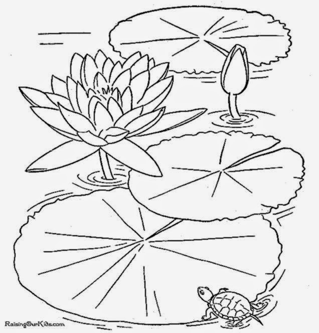 funpad coloring pages | Lily Pad Flower Coloring Pages – Colorings.net