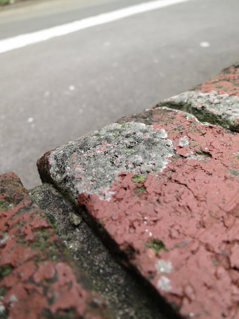 White and grey lichen on top of red brick wall.